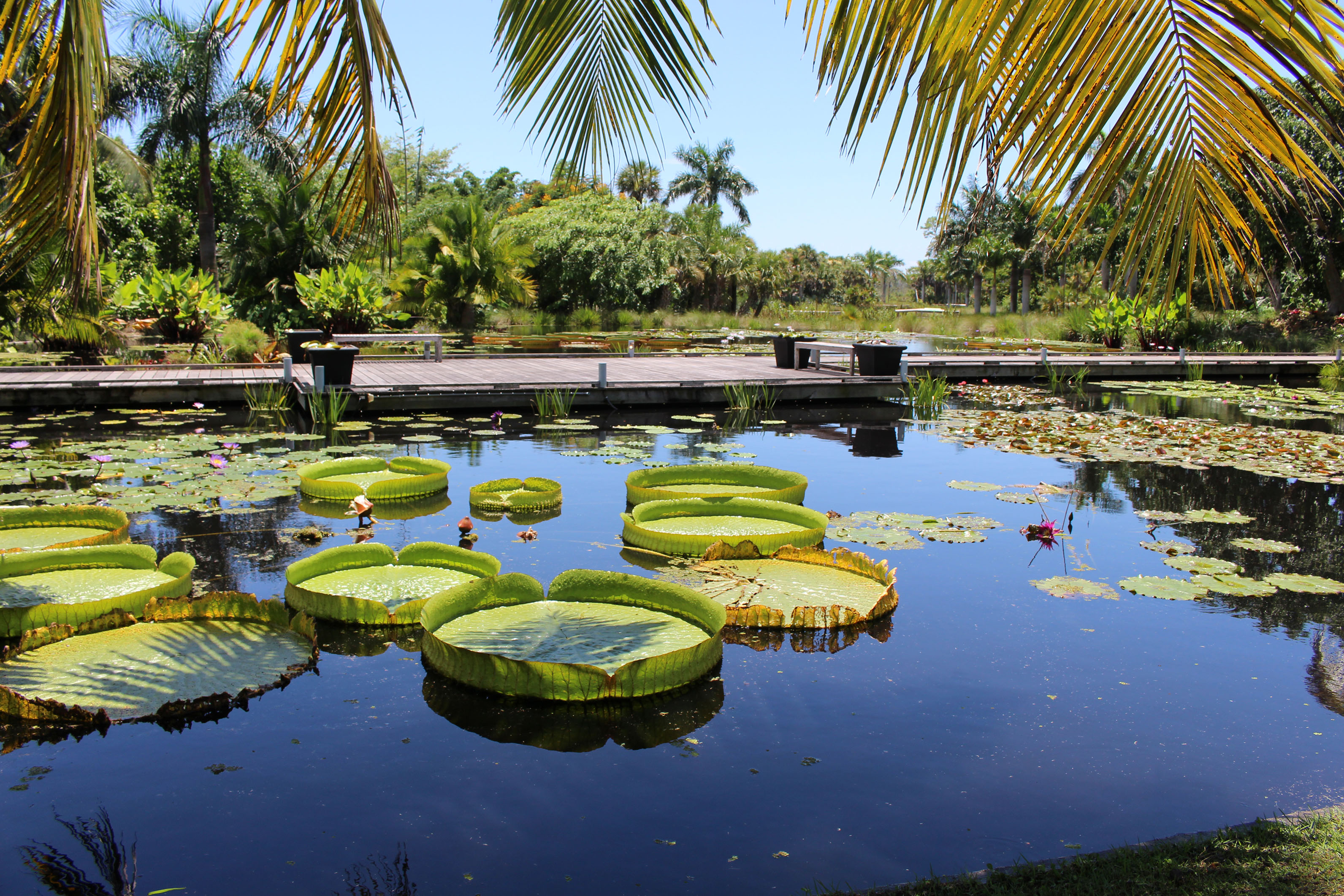 Award For Garden Excellence Celebration | Naples Botanical With Calendar For Naples Florida