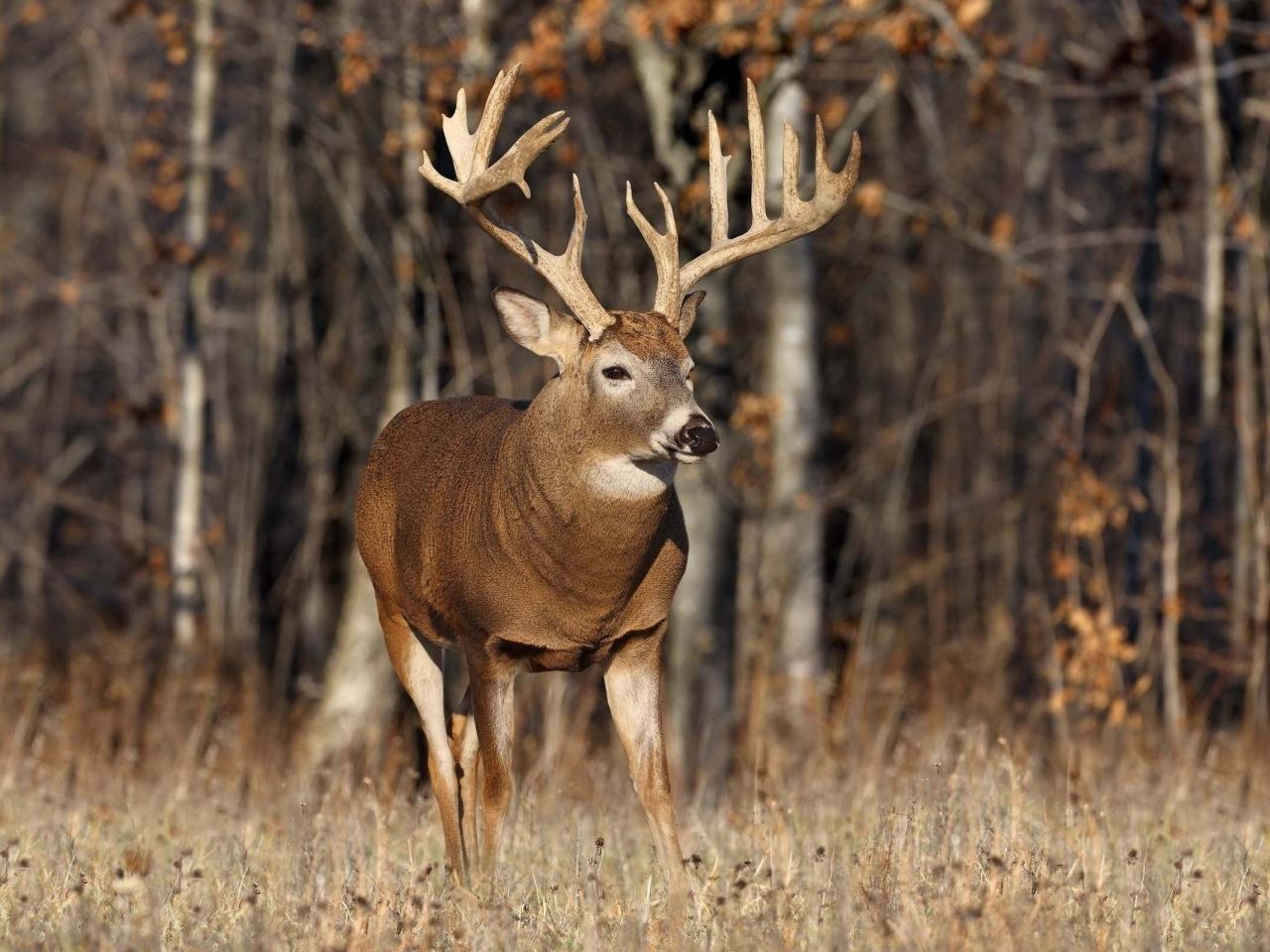 Best Deer Hunting Times – Bullseyehunting – Bullseye Hunting In Deer & Deer Hunting Whitetail Lunar Calendar