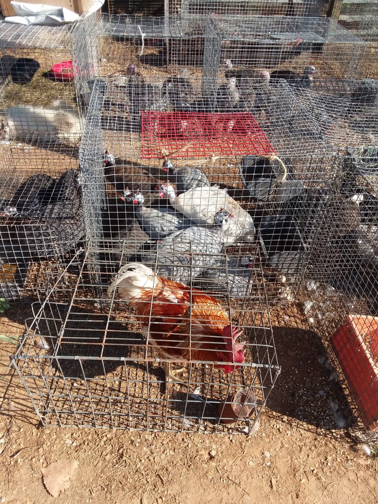 Flea Markets & Animals | Gucci To Goats In Ripley Miss Trade Day