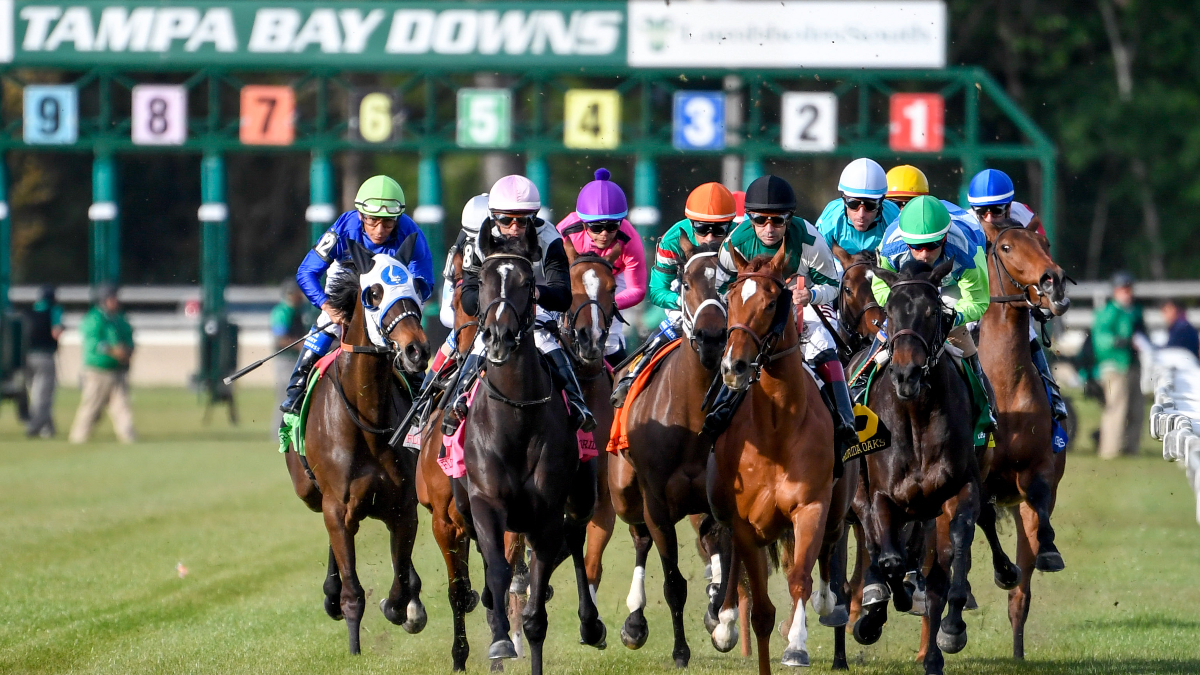 Horse Racing Picks For Wednesday, April 15: Best Value Bets With Tampa Downs Race Track Schedule