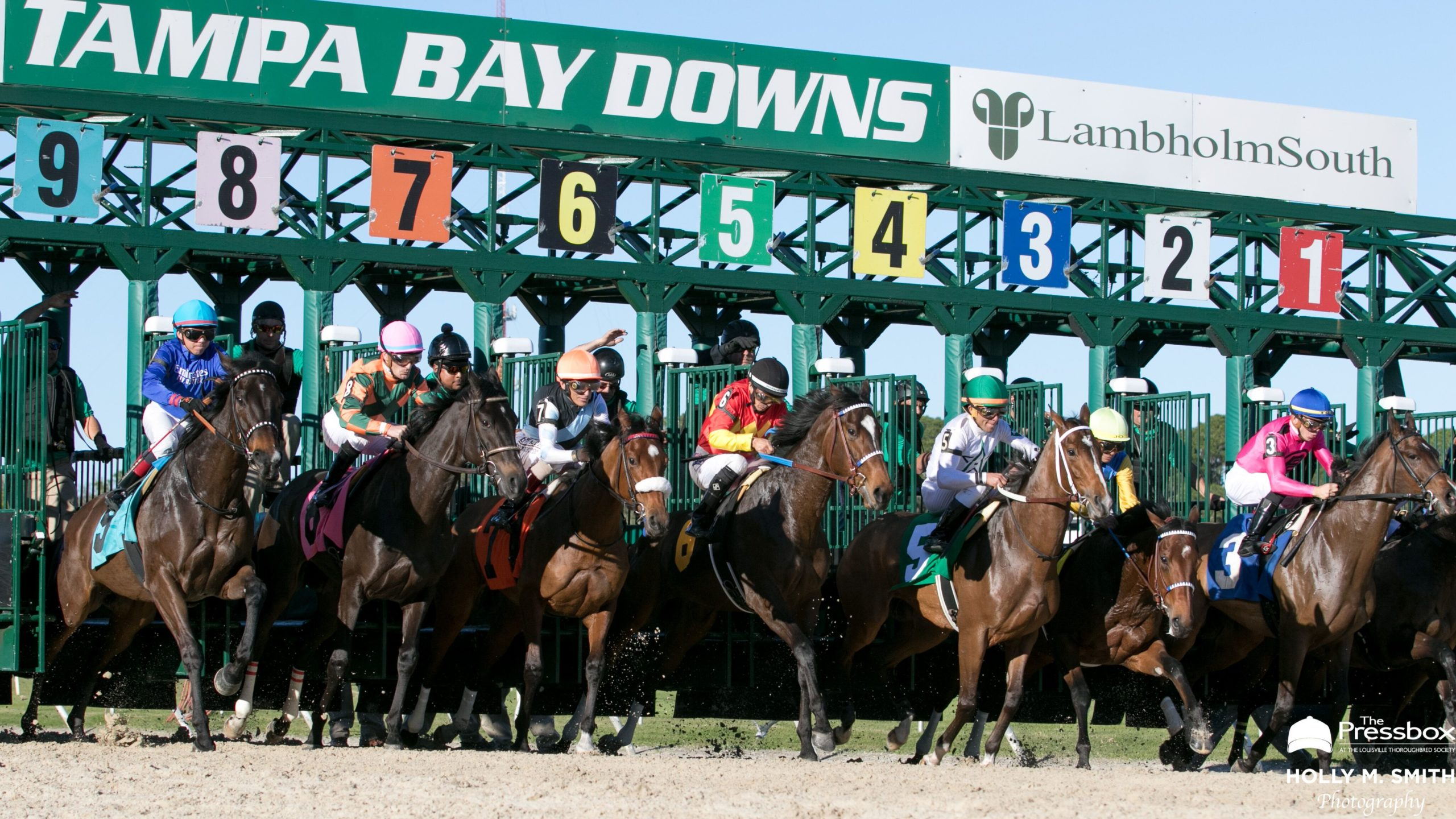 Horseracingnation: An In Depth Look At The 2020 Tampa For Tampa Bay Downs Stakes Schedule 2021