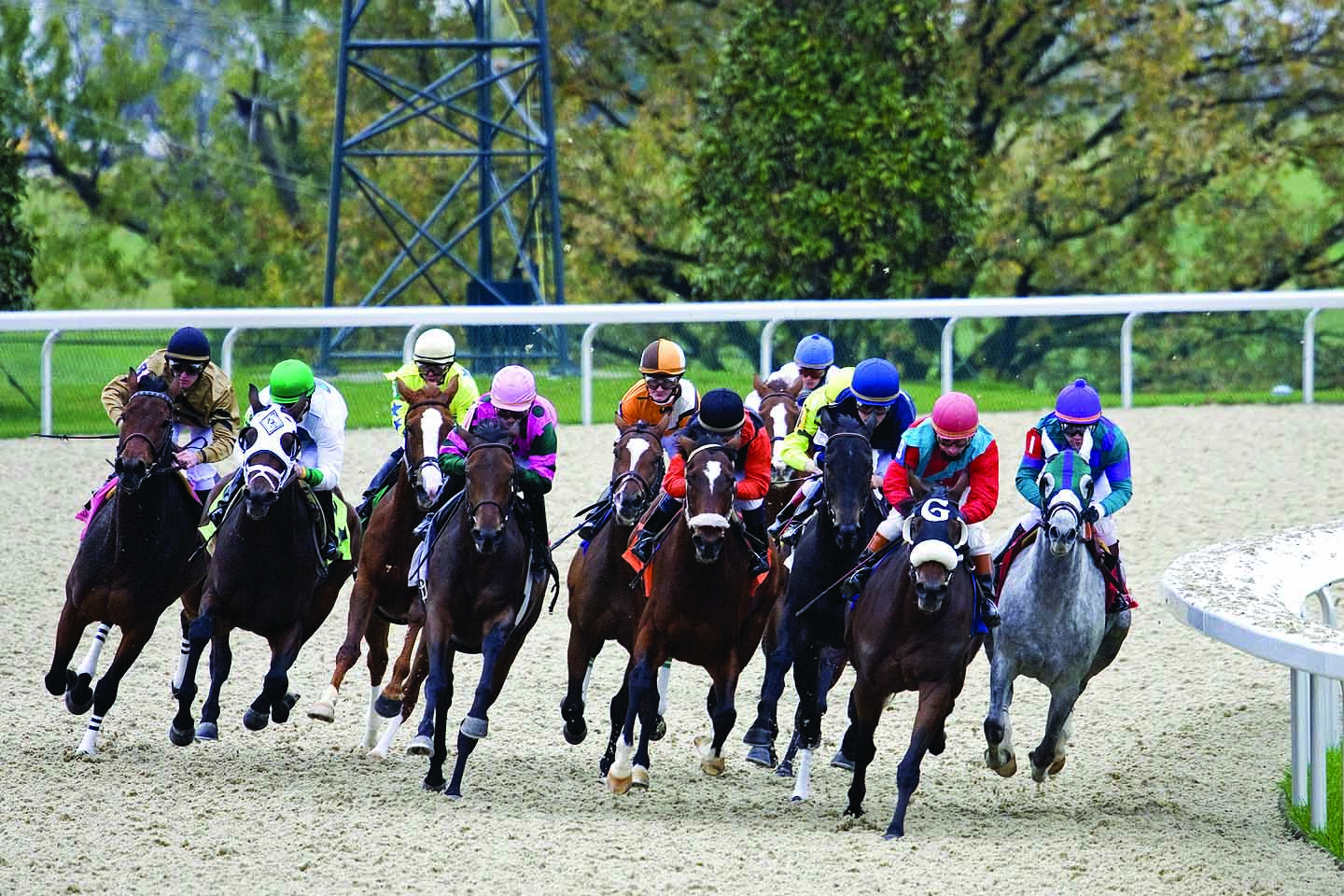 Major Us Thoroughbred Racing Organizations Announce Ban On Regarding Tampa Bay Downs Stakes Schedule 2021