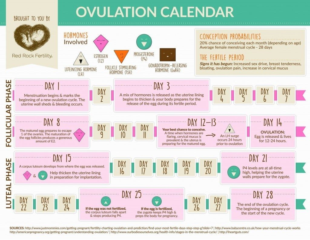 Pin On Operation Procreation In Trying To Conceive Calendar