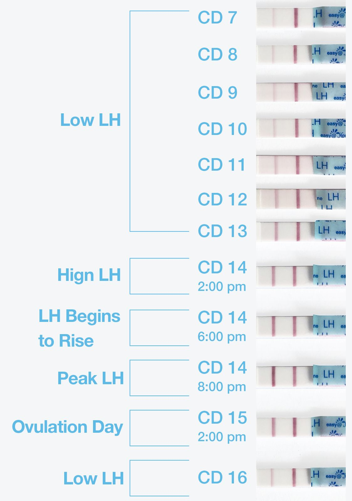 Pin On Ovulation Cycle & Ovulation Testing Intended For When To Take A Pregnancy Test Calendar