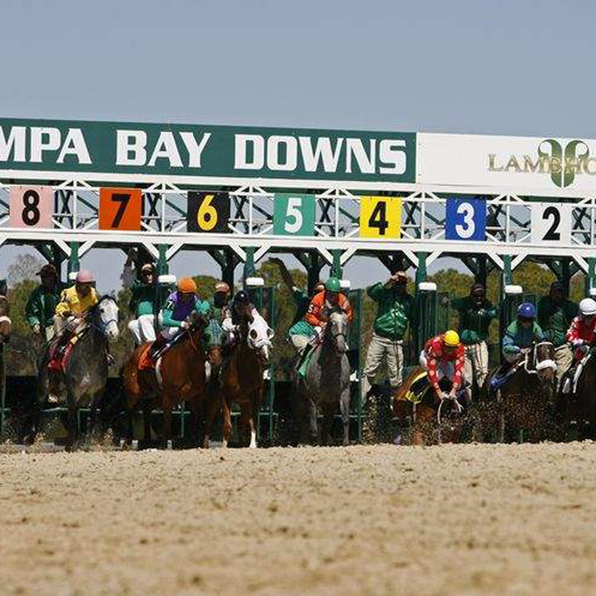 Tampa Bay Downs Closing Races To Fans After This Weekend For Tampa Bay Downs Schedule 2020