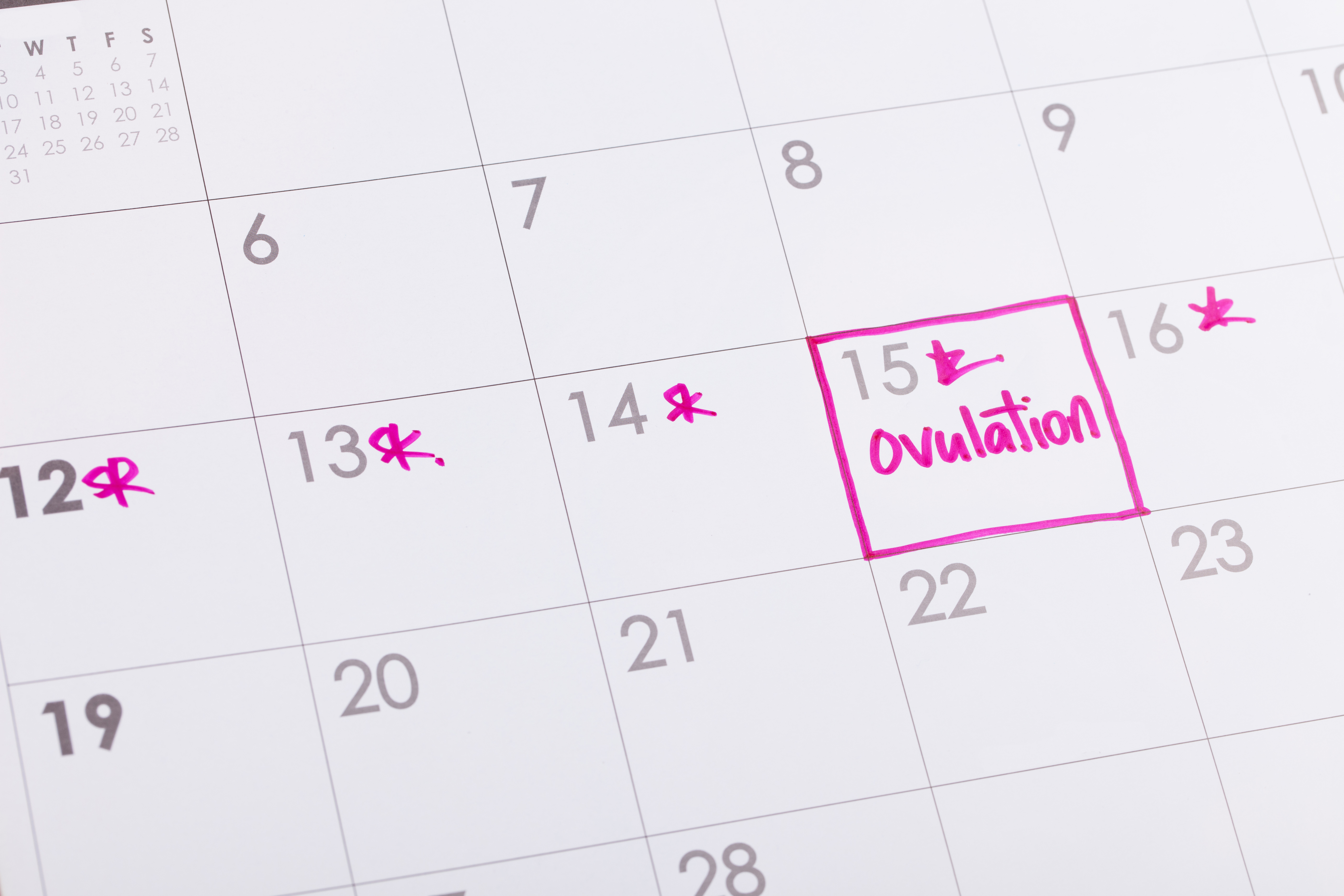 What Is Ovulation? Learn About Your Ovulation Cycle | Monash Ivf With Trying To Conceive Calendar