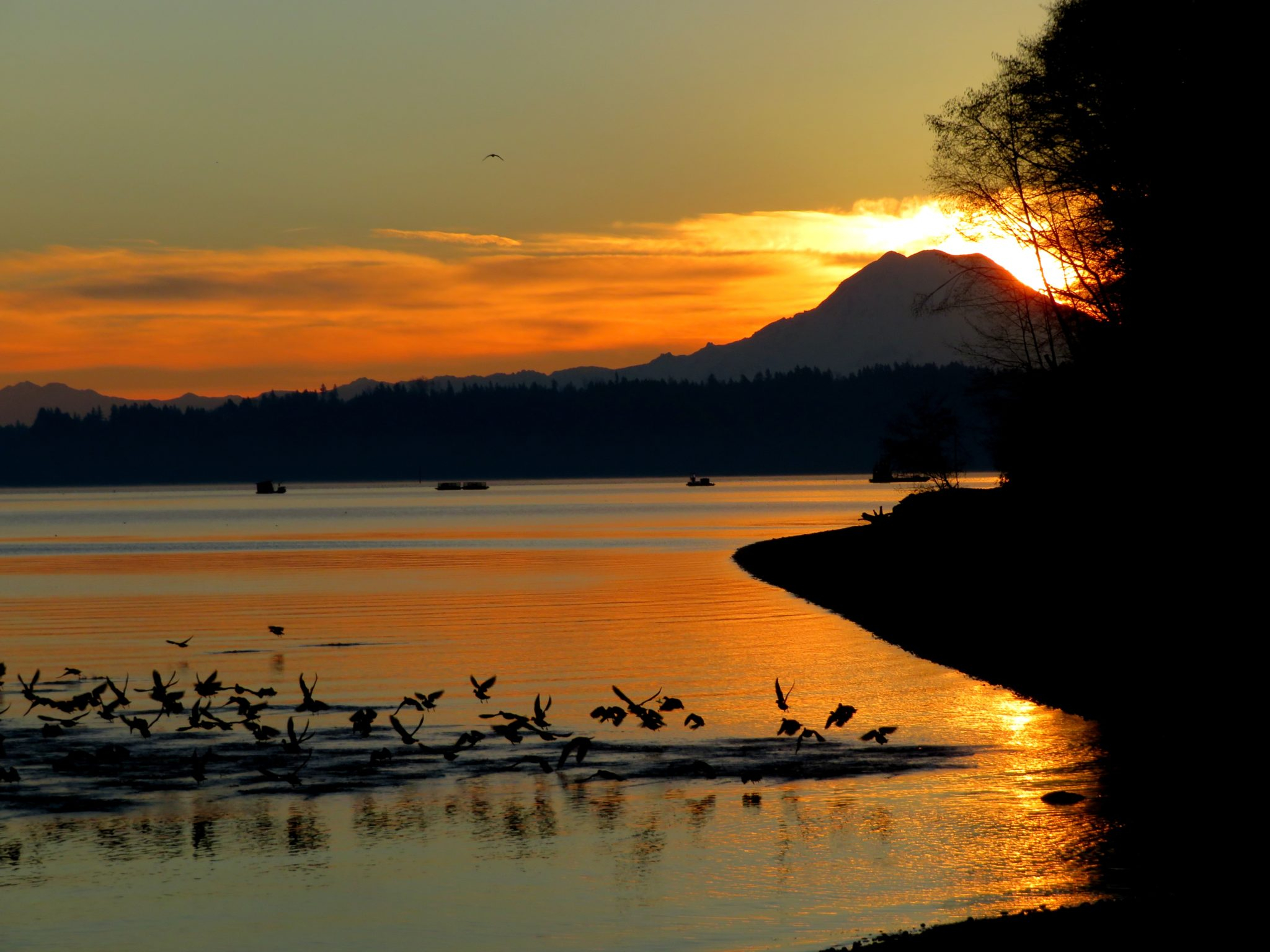 What To Do In Olympia This President's Day Weekend: Feb. 16 With Regard To What Time Is Sunset In Zip Code 98446