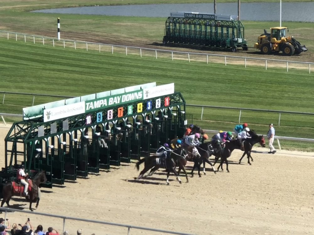 Tampa Bay Downs Archives – Horse Racing News   Paulick Report Within Tampa Downs Race Dates