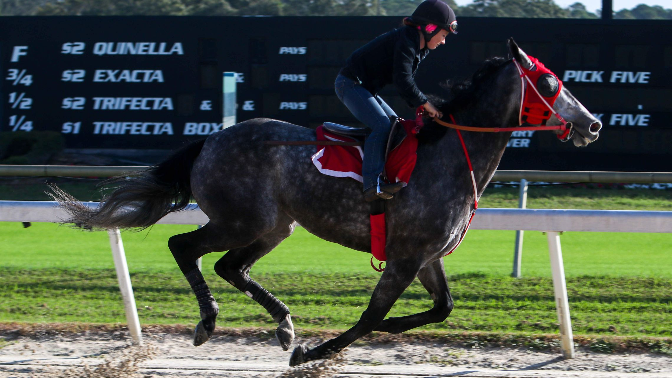 Tampa Bay Downs Offers Fun For More Than Steady Bettors Inside Tampa Bay Downs Racing Schedule