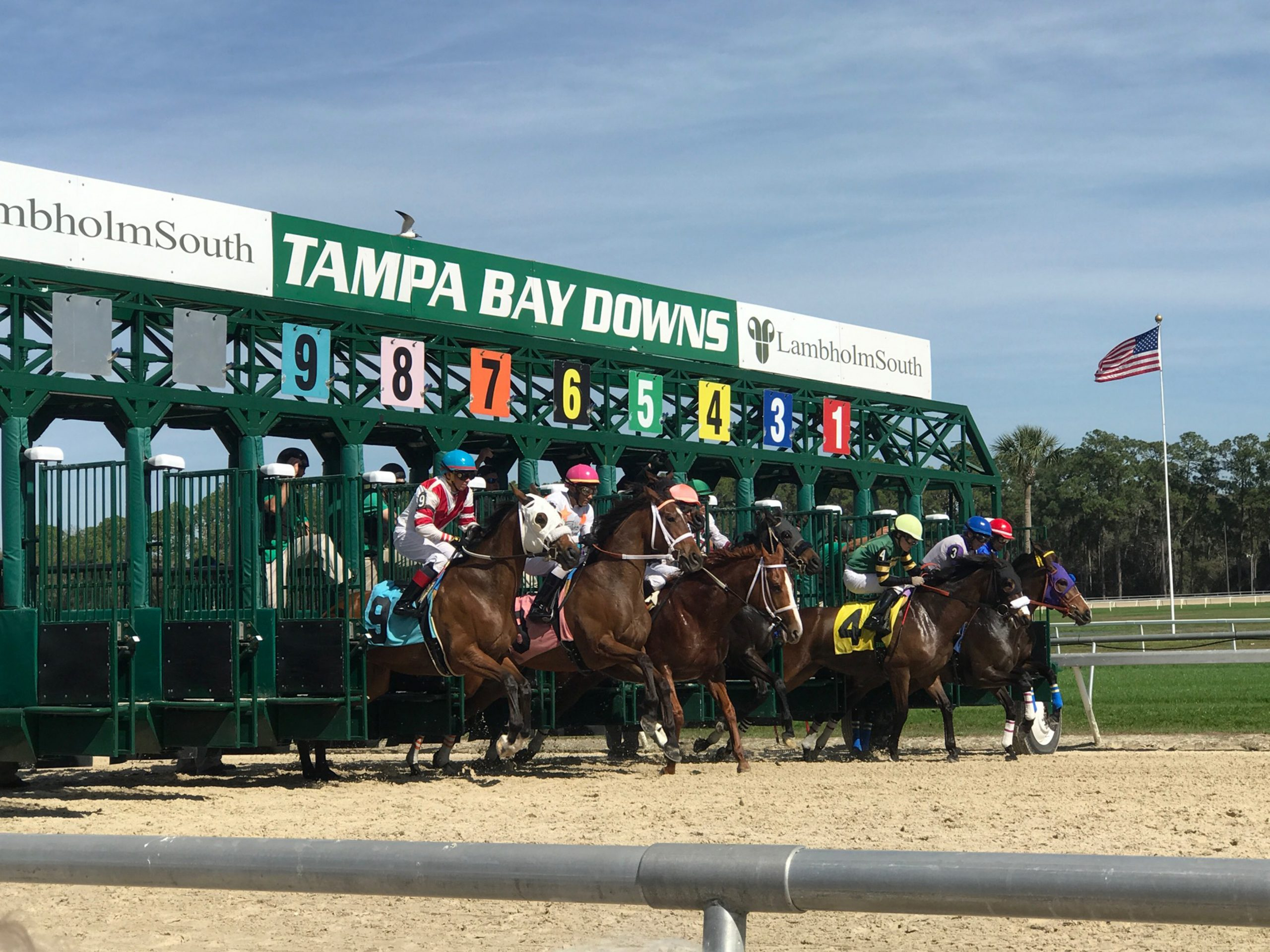 Us Racing – Tampa Bay Downs Returns In June | Quickgallop Pertaining To Tampa Downs Race Dates