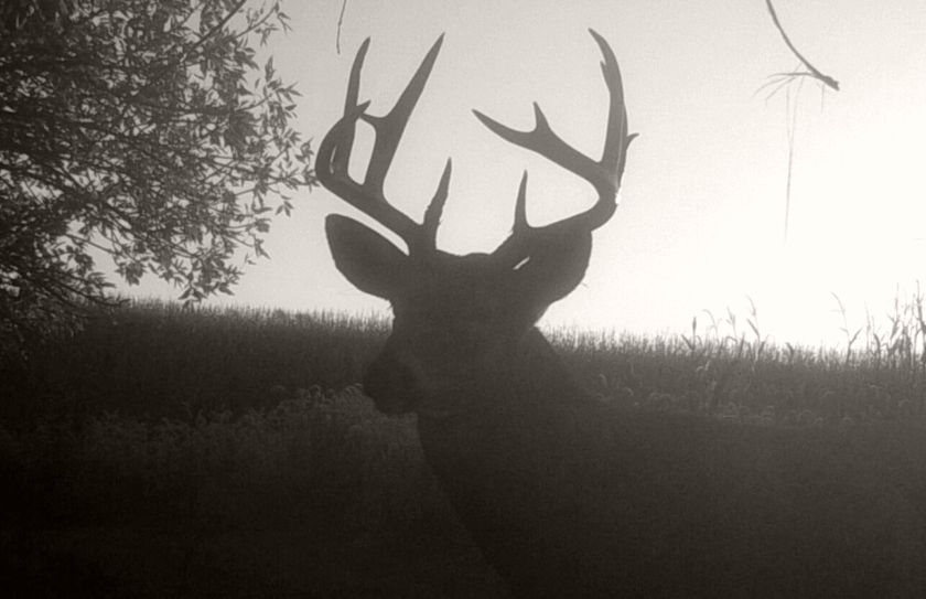 2018 Pre Rut Morning Hunt Alert | Whitetail Habitat Solutions Within Deer And Moon Phase