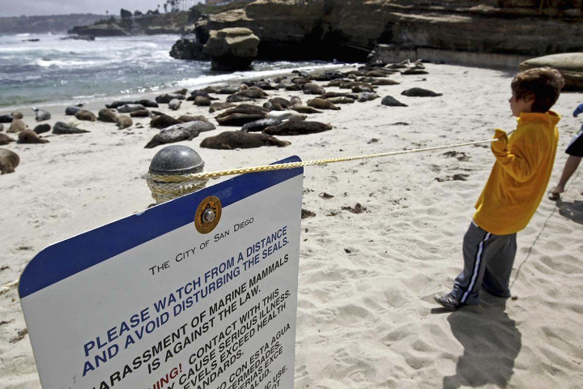 California Court Rules San Diego Beach Can Close For Seals In Court Calendar San Diego