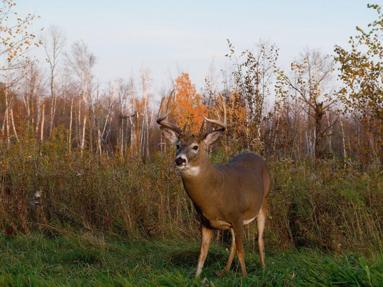 Get 2020 Il Deer Rut Season | Calendar Printables Free Blank In Deer And Moon Phase