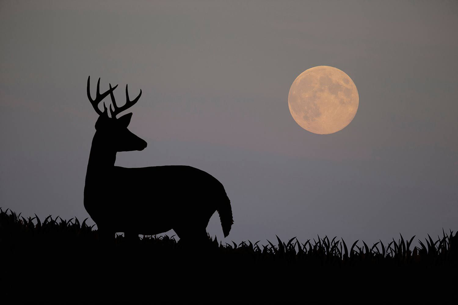 How Moon Phases Will Effect Deer Hunting For The Duration for Deer And Moon Phase