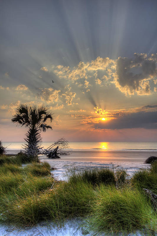 Hunting Island Sc Sunrise Palm Art Printdustin K Ryan Intended For Sunrise And Sunset Times Printable