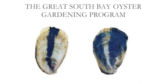 Join The Islip Oyster Gardening Program And Help Inside Town Of Oyster Bay Sanitation 2021