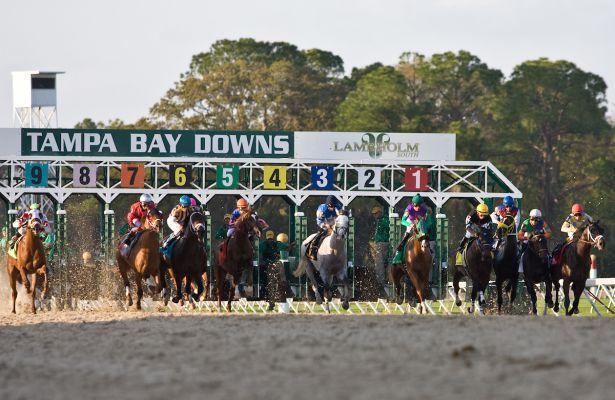 Racing Season Kicks Off At Tampa Bay Downs! Inside Tampa Bay Downs Racing Calendar