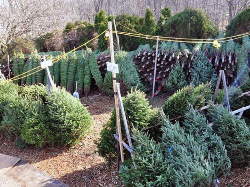 Residents: Put Out Christmas Trees On Recycling Days With Regard To Town Of Oyster Bay Sanitation 2021