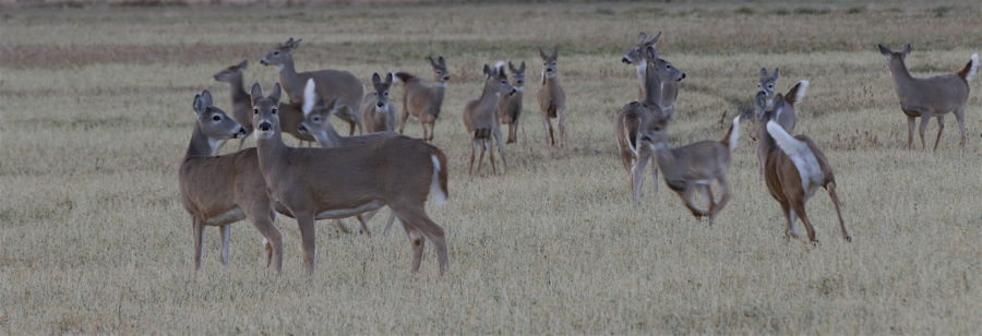 Surprising Full Moon Deer Activity – Ron Spomer Outdoors In Deer And Moon Phase