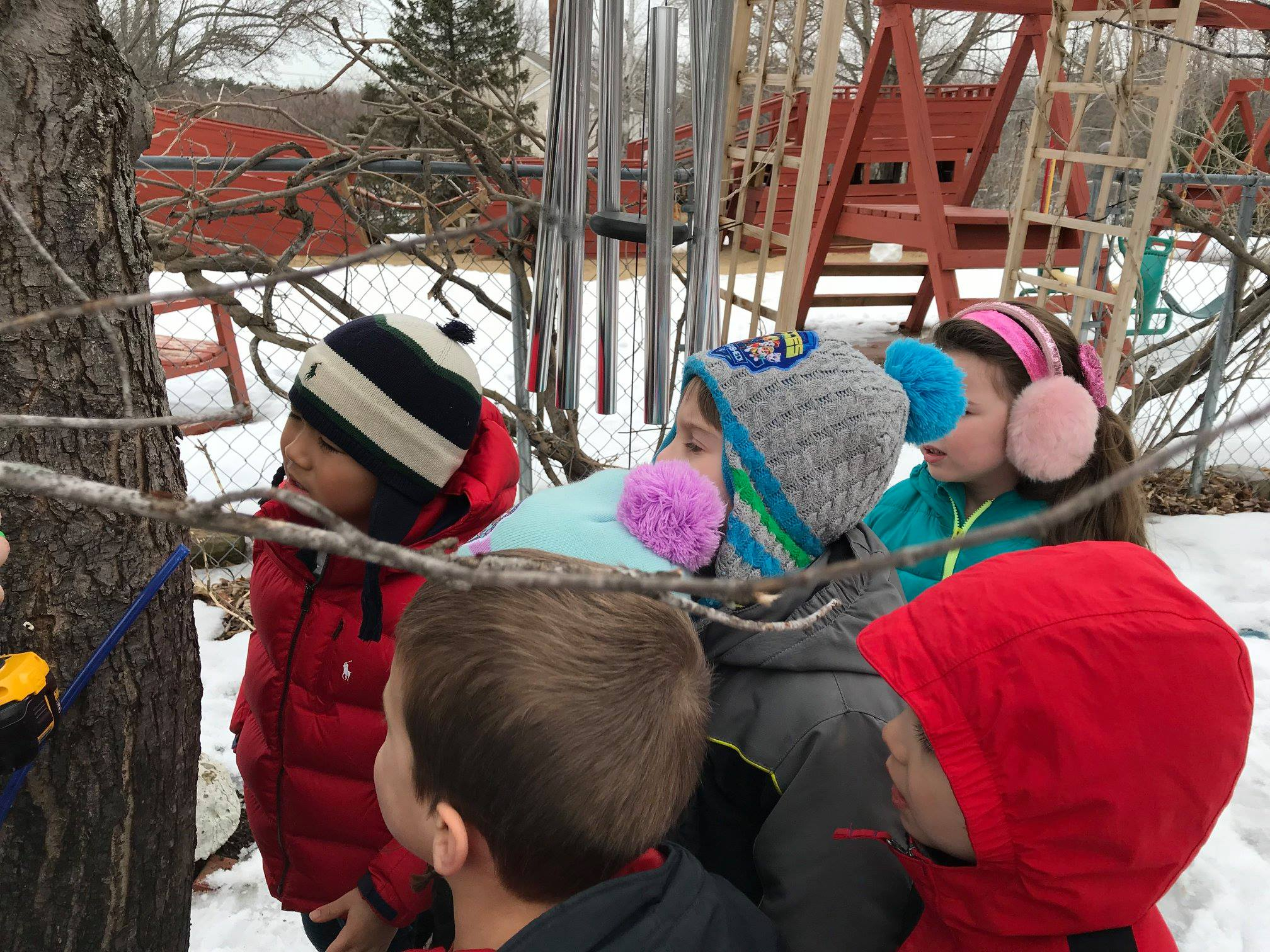 Tree Tapping | Merrimack Valley Montessori School Within Salem Nh School Calendar 2021