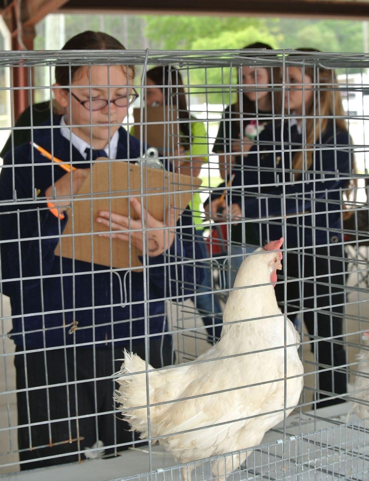 4H / Ffa Poultry Judging Inside Clay County Florida School Calendar 2021