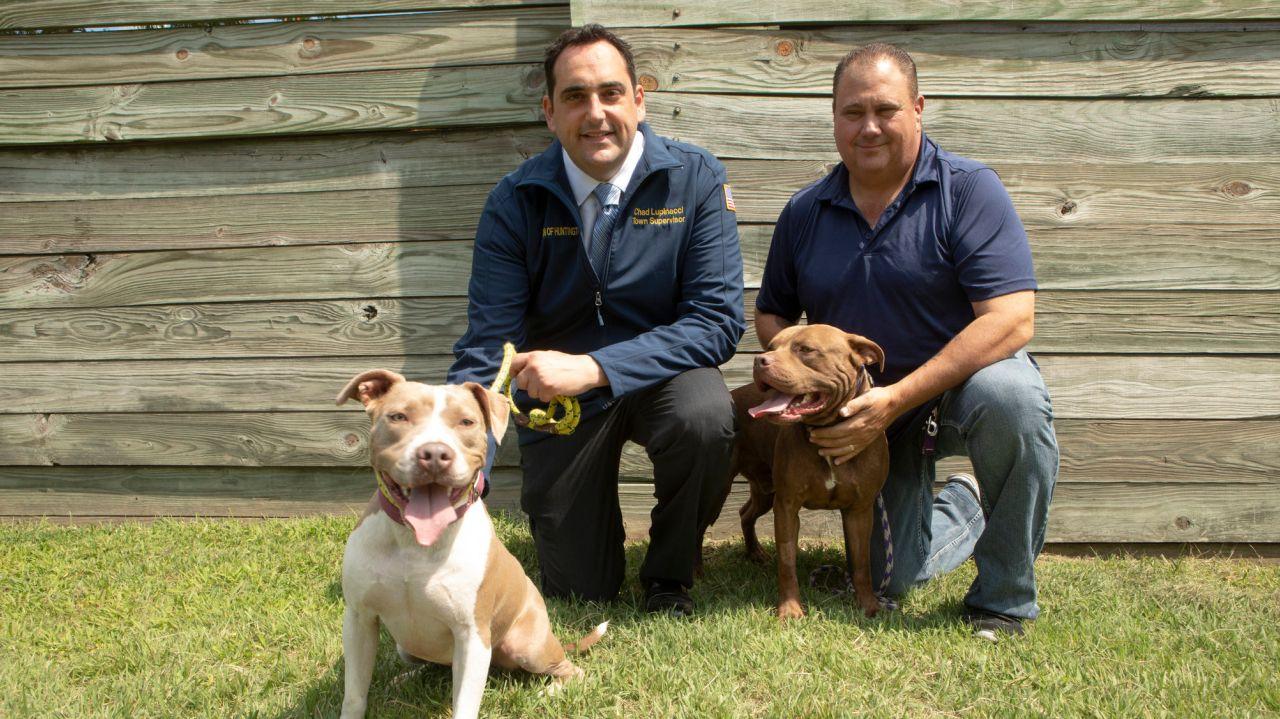 Huntington Town Offers Help To Island'S Overcrowded Animal Inside Long Beach Washington Events 2021